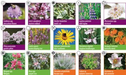 sun-pollinator-plants